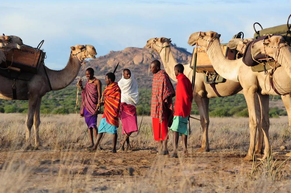 Karisia Camels