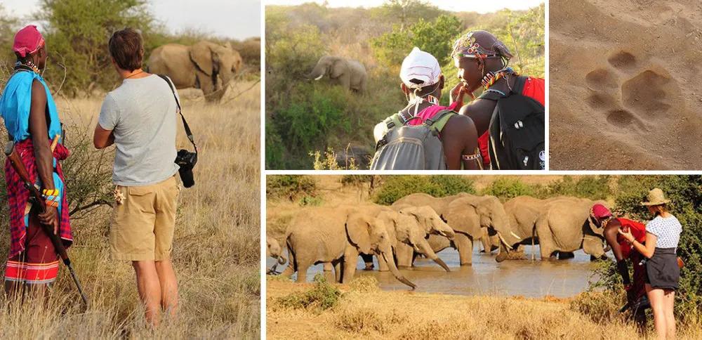 Karisia Walking Safaris Collage 2