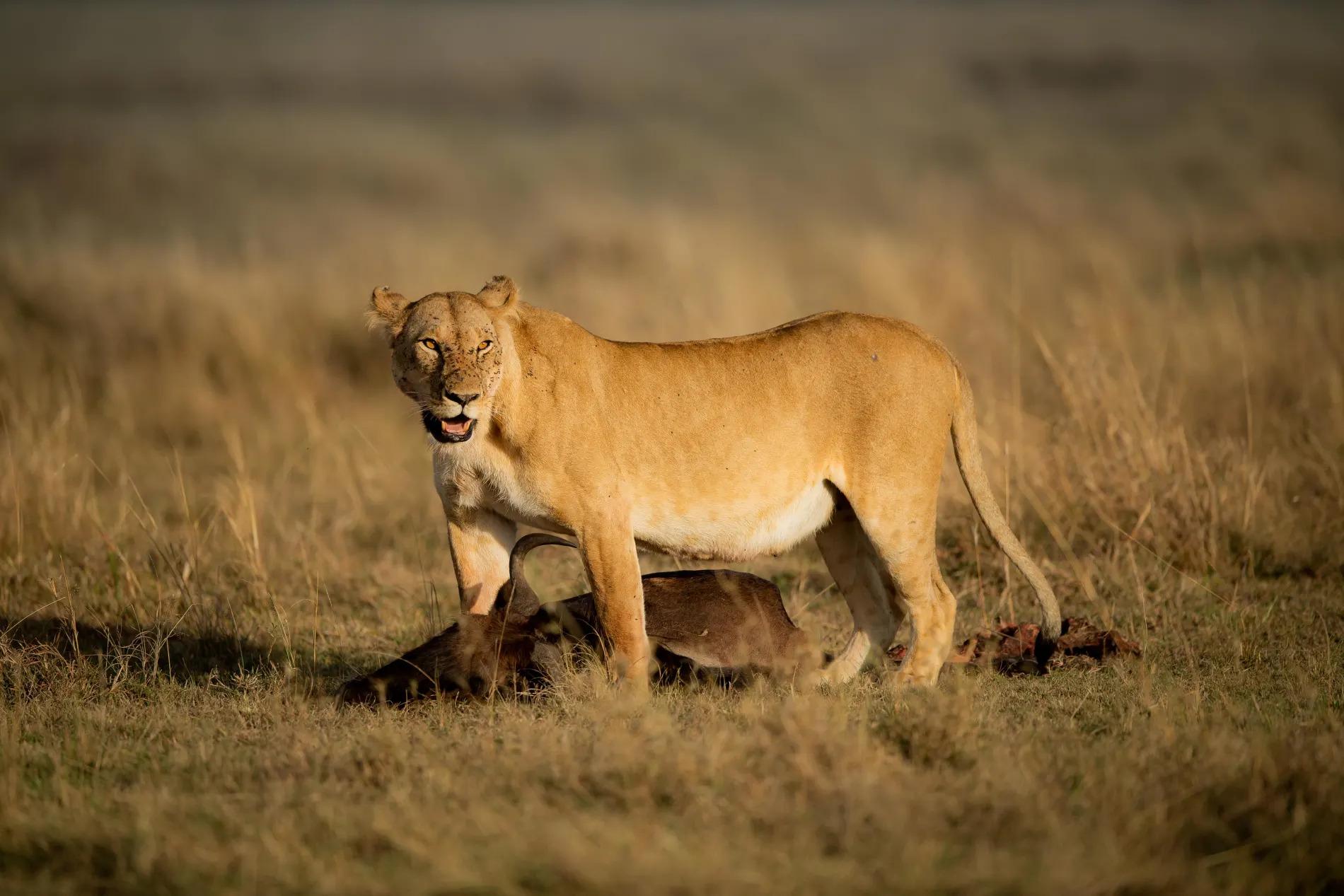 Marsh pride female over kill