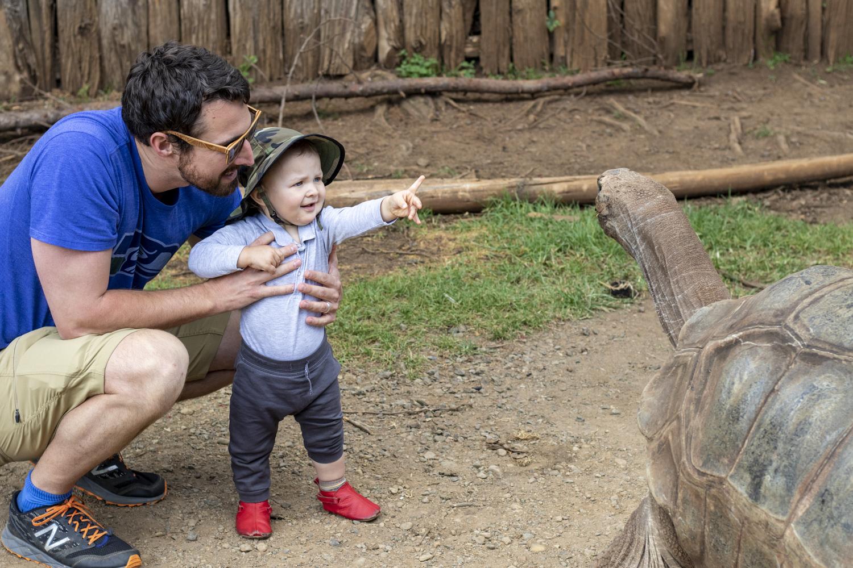 baby feeding a tortoise