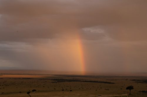 The drama above the Mara is just as gripping as the action on the ground