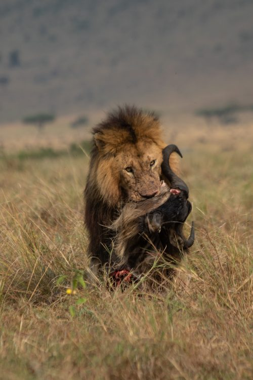 Another day, another meal in the Mara…