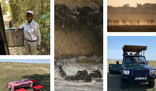Migration and picnics, all in a days work on Safari with Sophie
