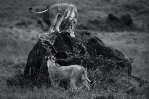 A black-and-white conversion of playtime around the rock