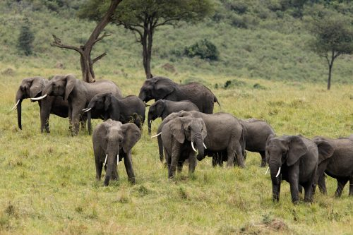 A large herd of elephants looking relaxed along the escarpment