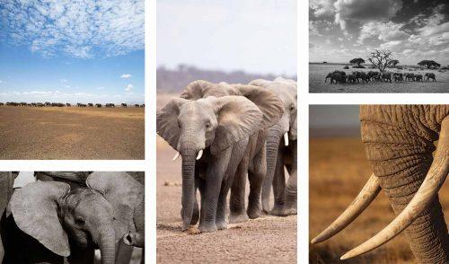 Amboseli, famous for it's dramatic scenery and abundance of elephant