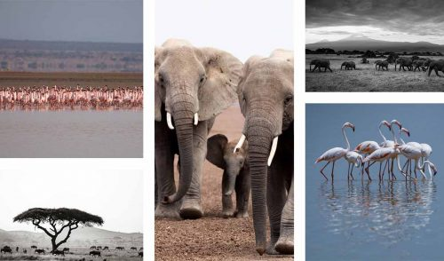 The contrast of Lake Amboseli and it's vibrant flamingoes and the dusty elephants makes for fabulous photography