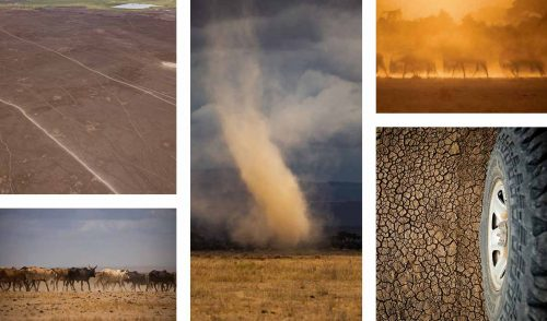 Dry, dusty scenes in Amboseli are a photographer's dream
