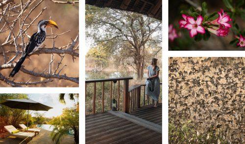 An abundance of fauna and flora in Tsavo West