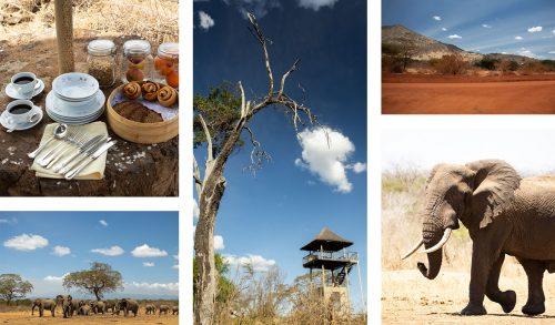 Big Tuskers, and long safari days