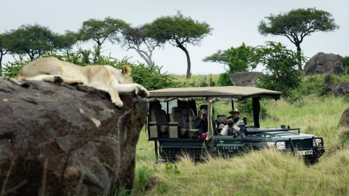 Angama guests enjoying a lovely lion sighting