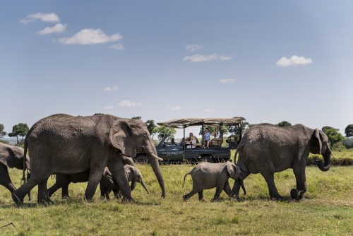 A family of elephants enthrals Angama guide and guests