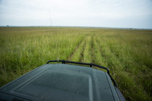 The grasses of the Mara create interesting photographic opporunities