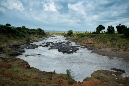 The Mara River, healthily flowing yet not as full as recent months