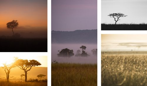 The pastel colours of early morning landscapes in the Mara