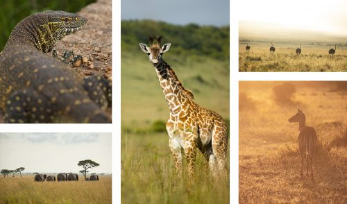 So much variety and abundance in the Maasai Mara throughout the year