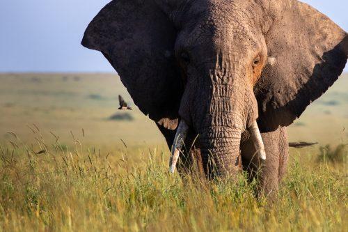 An elephant illuminated