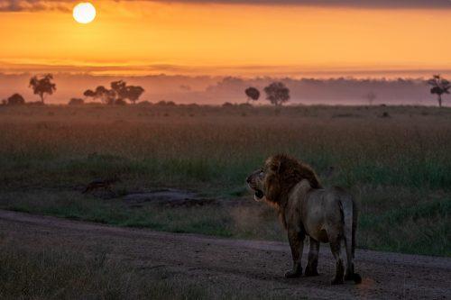 Kibogoyo, beautifully backlit by the sunrise