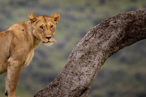 Magnificent creatures to practice portrait shots on