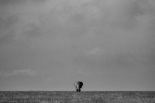 A bulle elephant dwarfed by the vast Mara sky