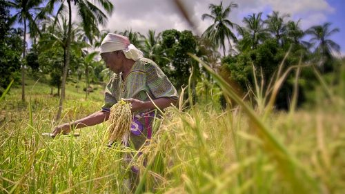 Grandmother working her land