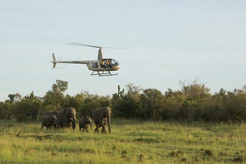 Behind the scenes with the Mara Elephant Project