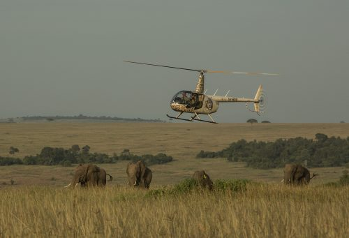 Tracking elephants from the air