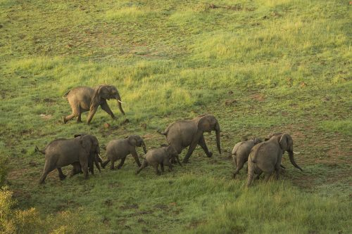 Elephants viewed from above