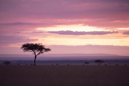 Balanite sunsets, iconic of the East African grasslands