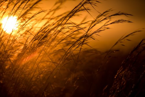 The tall grasses can be a blessing or a curse for photographers