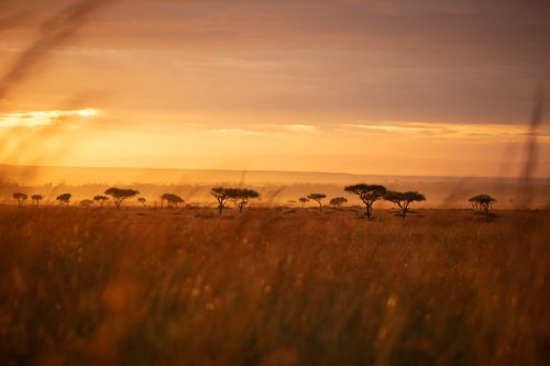 Magnificent morning light on the open plains of the Mara Triangle