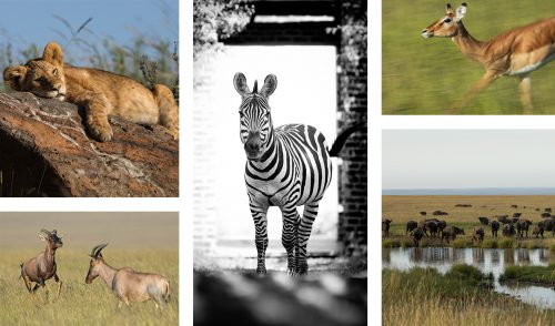 This week brought an abundance of animal sightings in the Mara Triangle
