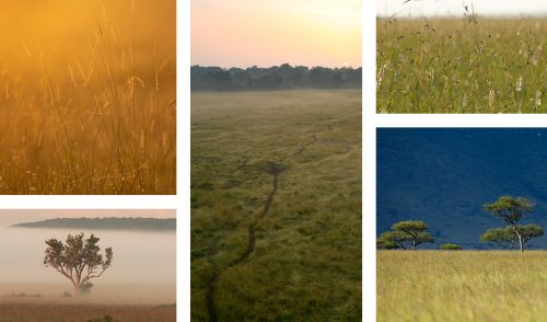 Landscape photography in the Mara is about making the tall grass work in your favour