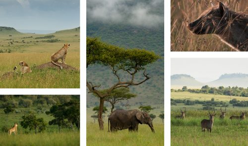 Animals and the grasslands, intertwined and inseparable