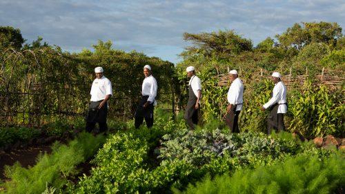 Angama chefs in the Shamba