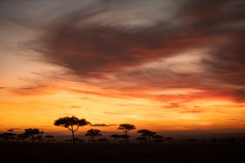 Morning light in the Mara does not disappoint