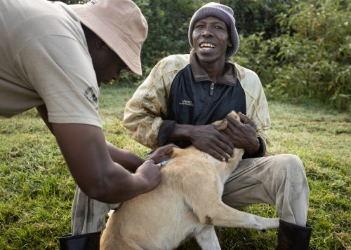 Vaccinating dogs from nearby communities