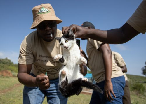 One of 1444 dogs, cats and donkeys vaccinated against rabies