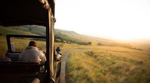 Early morning game drives in the Maasai Mara