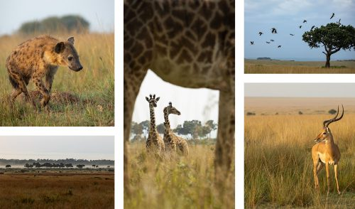 The magnificent variety of the Mara eco-system