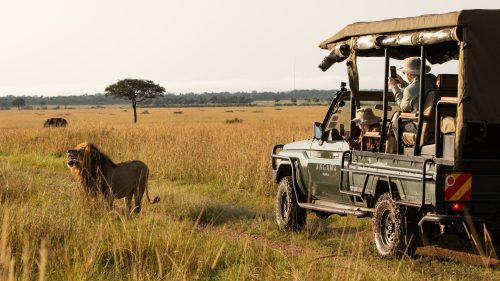 Exploring the lions of the Mara Triangle