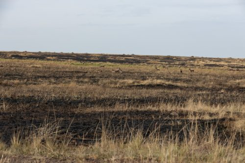 Part of the area burnt by the Mara Conservancy this past week