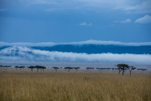 The ever changing landscape of the Mara Triangle