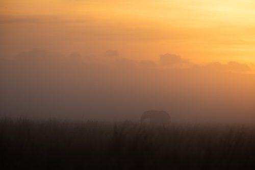 A misty sunrise punctuated by a solitary elephant