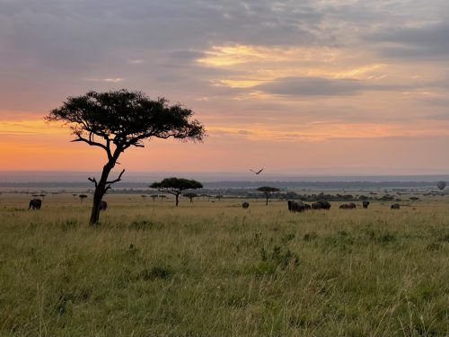 The magic of the Mara at dawn