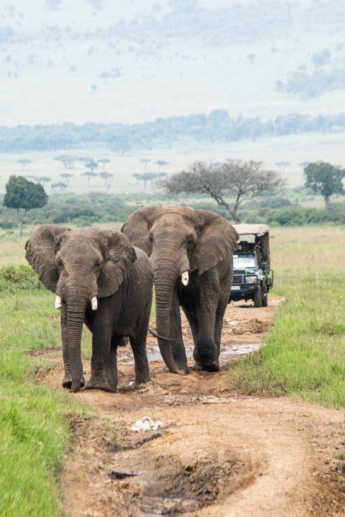 The Mara Triangle roadblocks