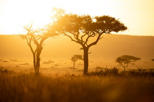 The sun sets on another magnificent day in the Mara