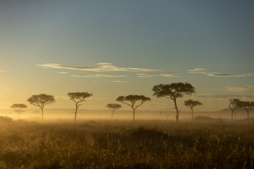 Sunrise in the Maasai Mara