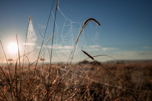 This was the second week in a row I was captivated by the morning dew collecting on the spiderwebs