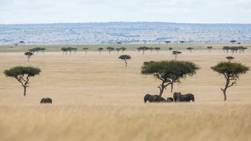 A family of elephant seek shade from the hot midday sun